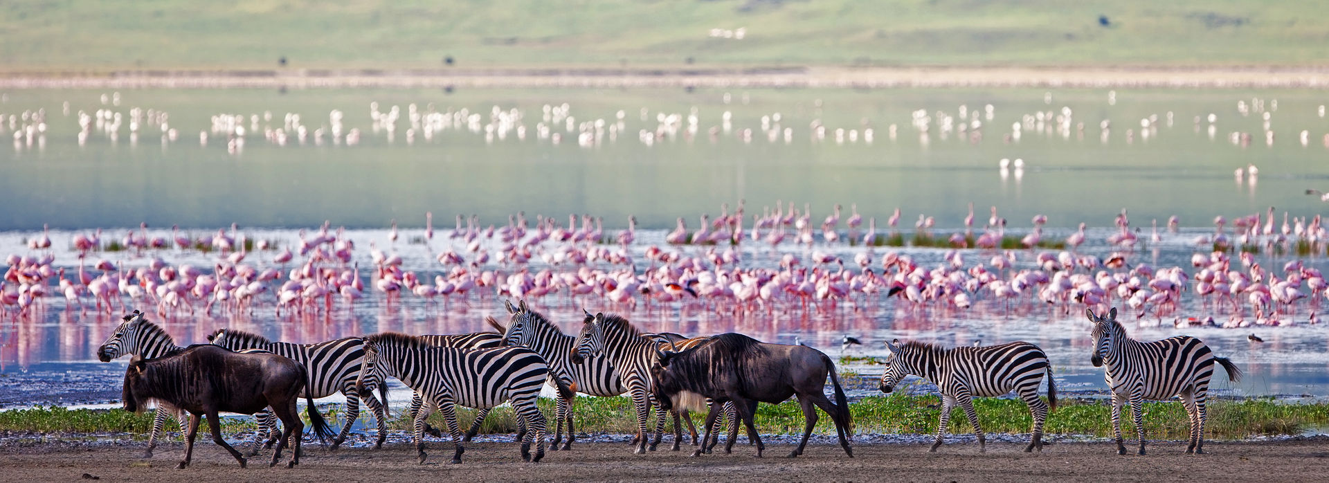 The best East African wildlife reserves