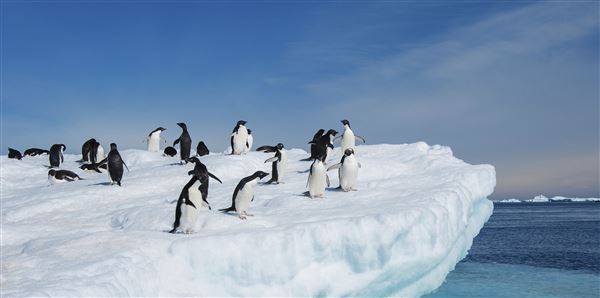 Antarctic Explorer (Sea Adventurer)  Tours and cruise holiday experience