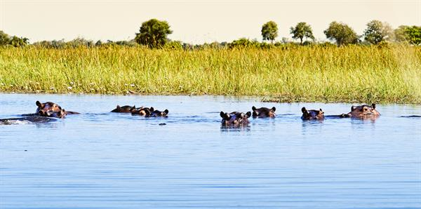 Botswana & the Okavango Delta Tours, independent and couples holiday experience