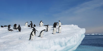 Emblematic Antarctica Independent, couples and cruise holiday experience