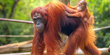 Borneo Discovery Tours, couples and flights holiday experience