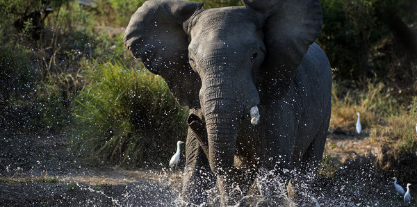 Botswana Wildlife Safari Tours holiday experience