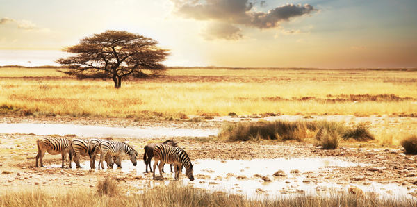 Namibia, Botswana & Victoria Falls Tours and flights holiday experience