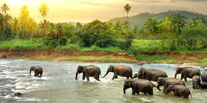Highlights of Sri Lanka Tours, family and couples holiday experience
