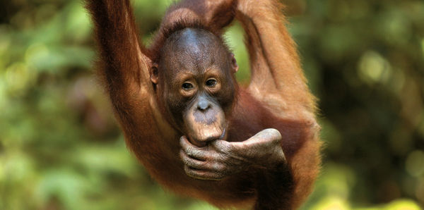 Borneo Adventure  Tours and couples holiday experience