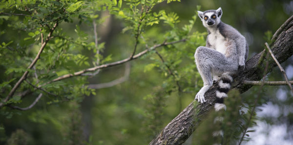 Madagascar Wildlife     Tours, couples and flights holiday experience